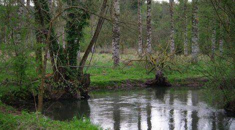 Exploitation et restauration de zones humides à Vouneuil-sous-Biard